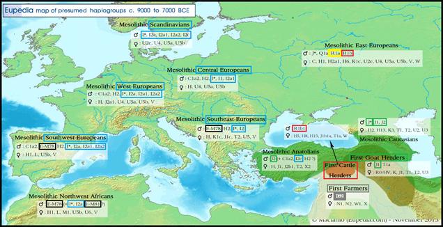 8000BCE-haplogroups